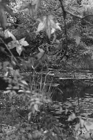 Осень в саду Клода Моне